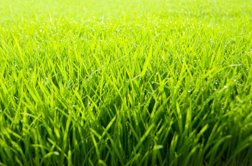 The Importance of Lawns in Landscape Design